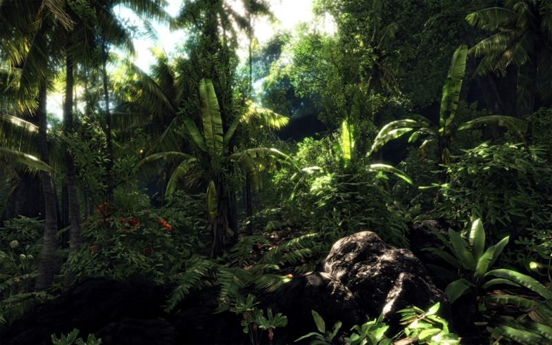 forests Crysis wallpaper