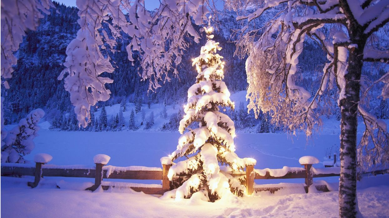 winter snow Christmas trees wallpaper