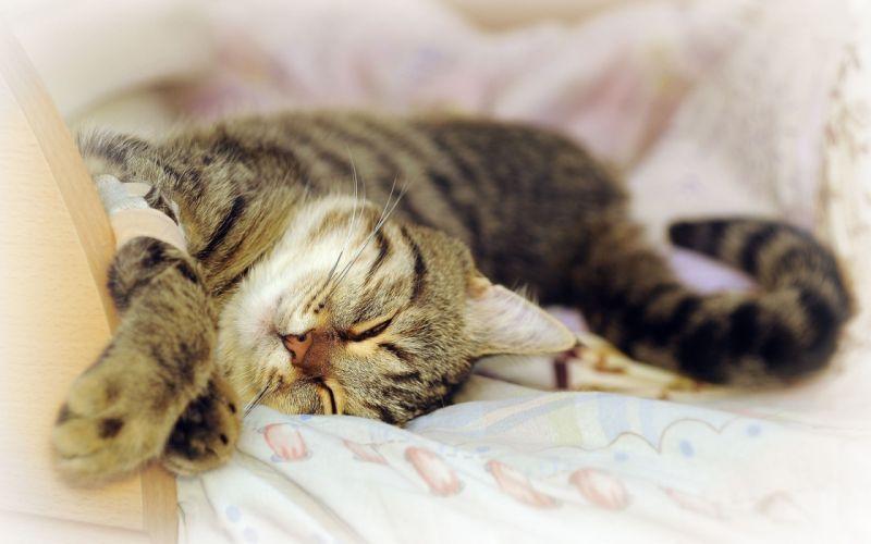cats animals sleeping wallpaper