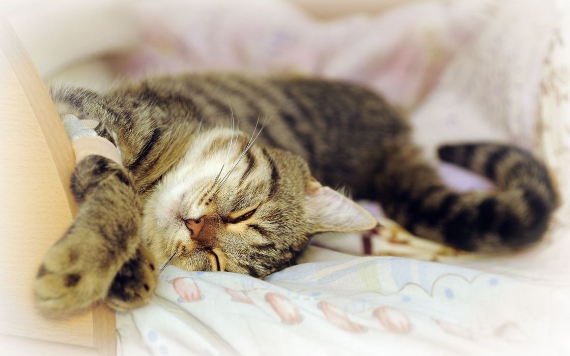 cats animals sleeping wallpaper