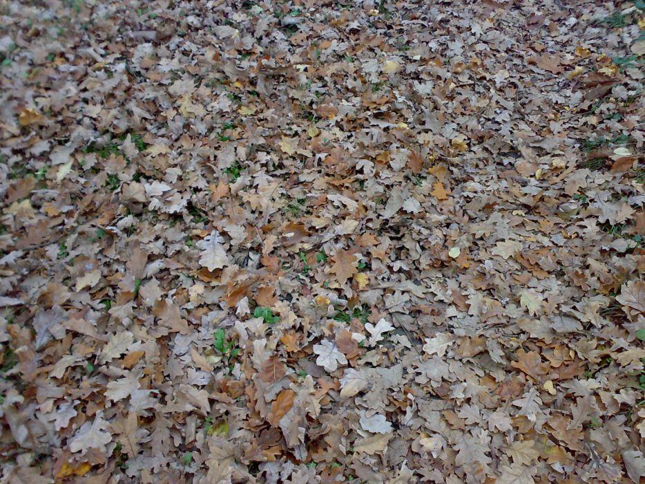 nature autumn leaves fallen leaves wallpaper