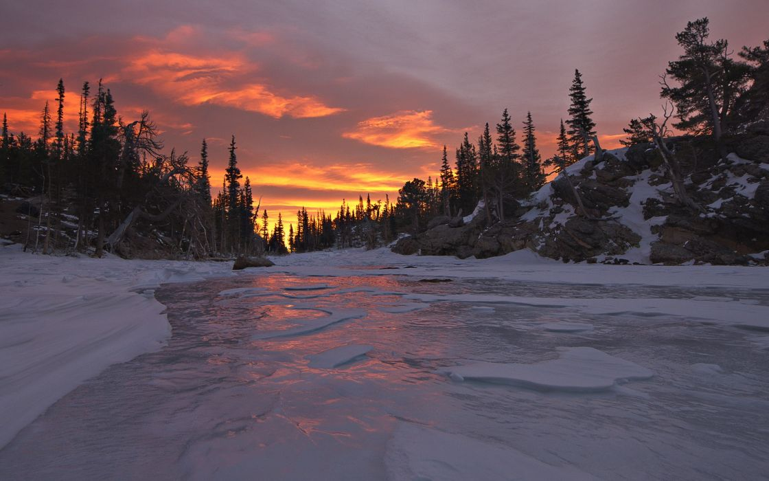 ice snow trees dawn wallpaper