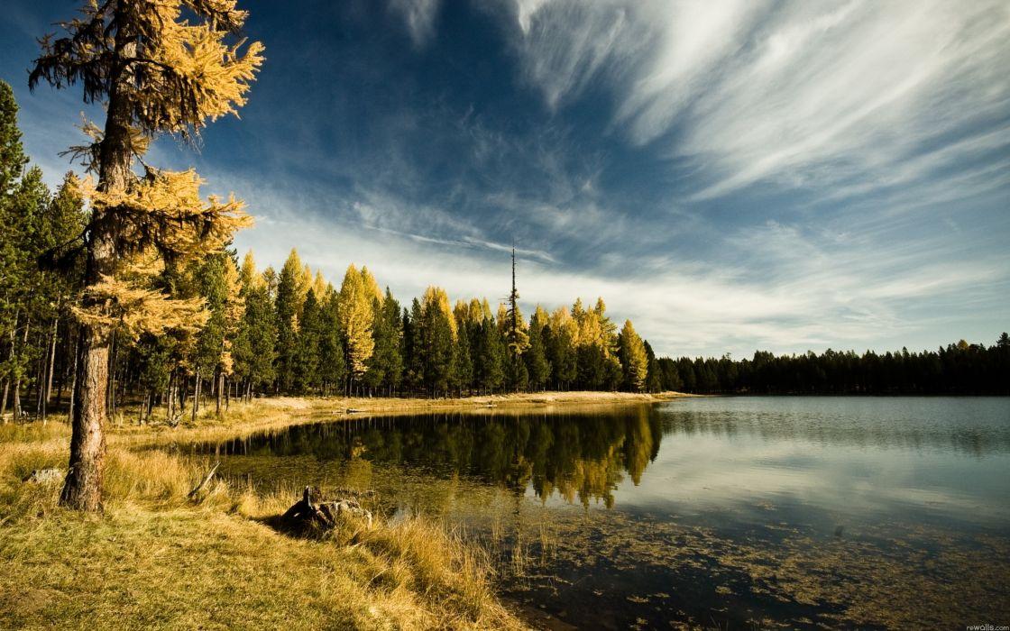 nature trees lakes wallpaper