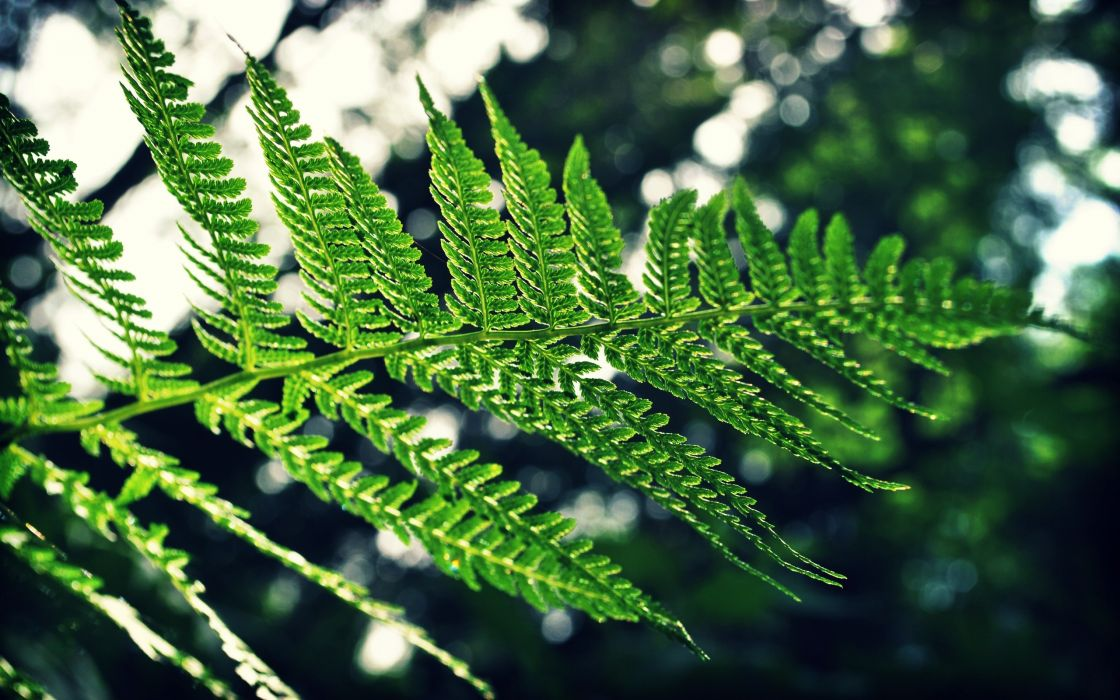 nature trees leaves ferns wallpaper