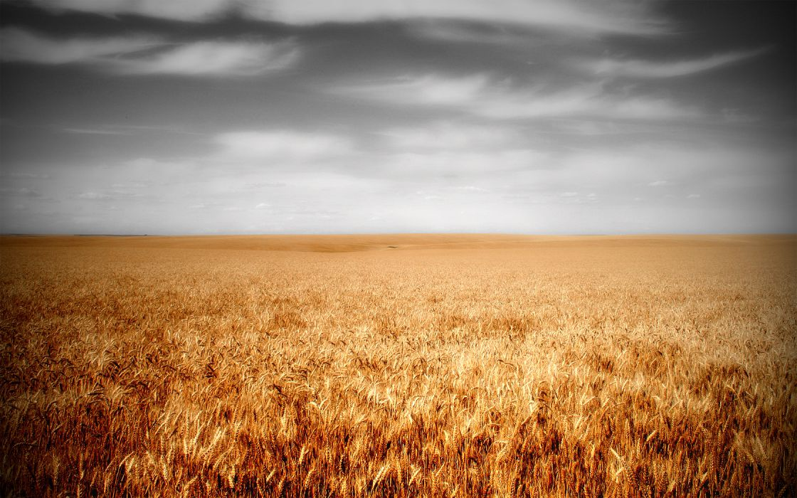 clouds landscapes nature fields wheat wallpaper