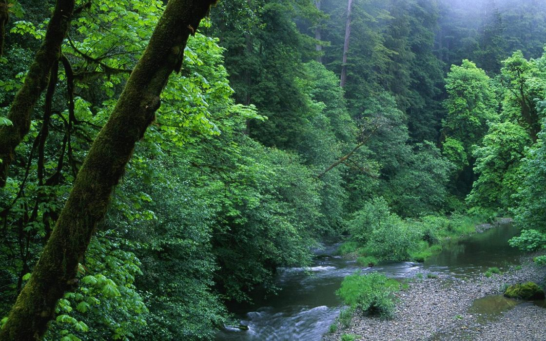 landscapes nature forests woods California wallpaper