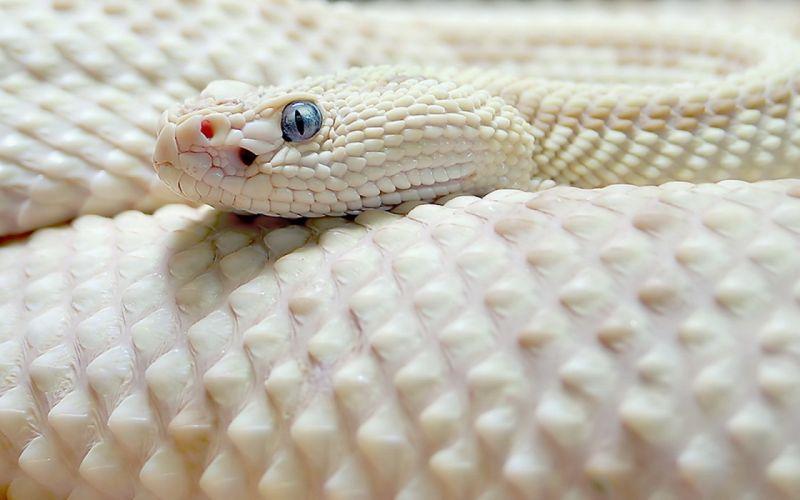 wildlife snakes reptiles wallpaper
