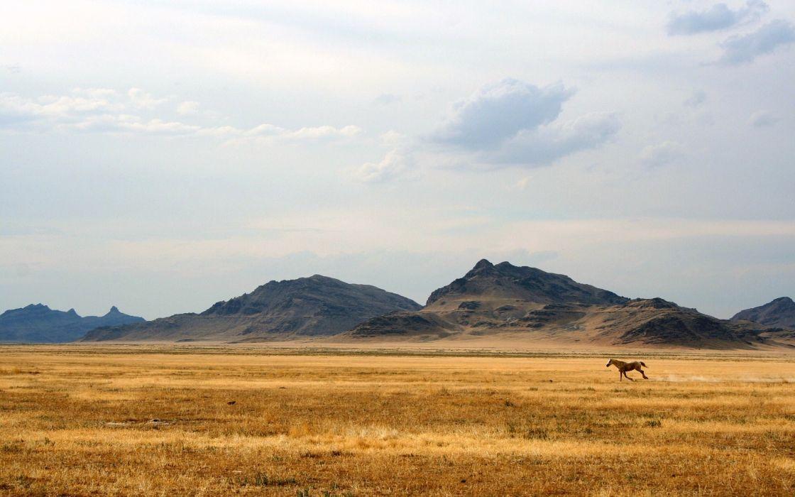 landscapes horses skyscapes wallpaper