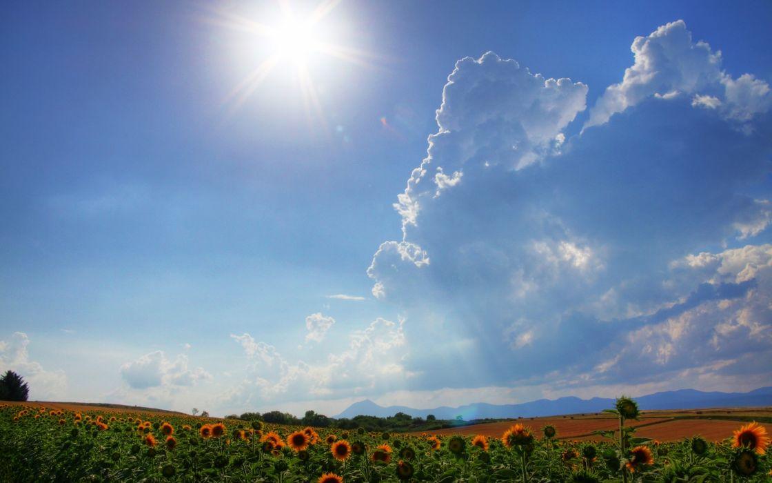 clouds landscapes fields sunflowers wallpaper