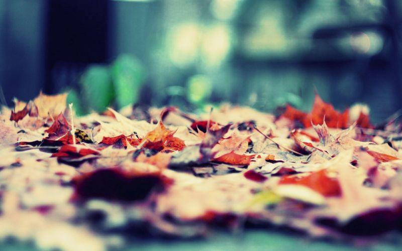 nature leaves autuum wallpaper
