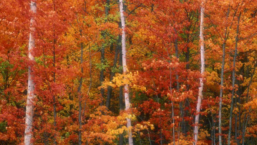 autumn peak Canada wallpaper