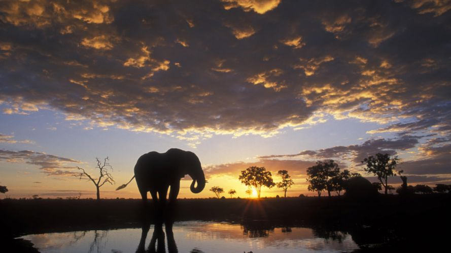 sunset silhouettes elephants wallpaper