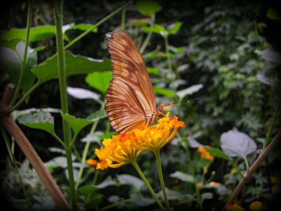 flowers animals butterflies wallpaper