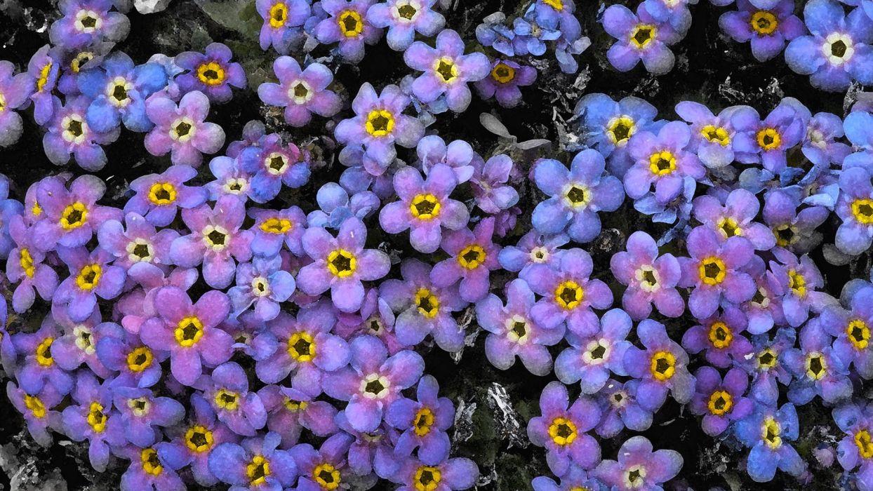 flowers Colorado Mount Alpine Colorado wallpaper
