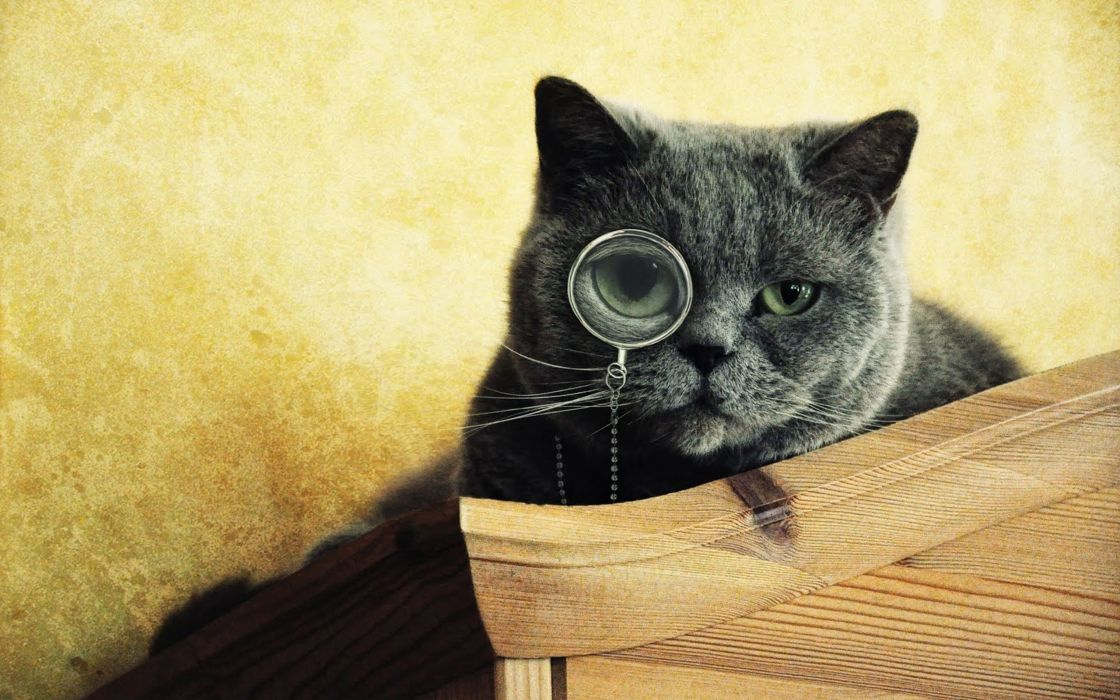 cats animals funny monocle funny animals wallpaper