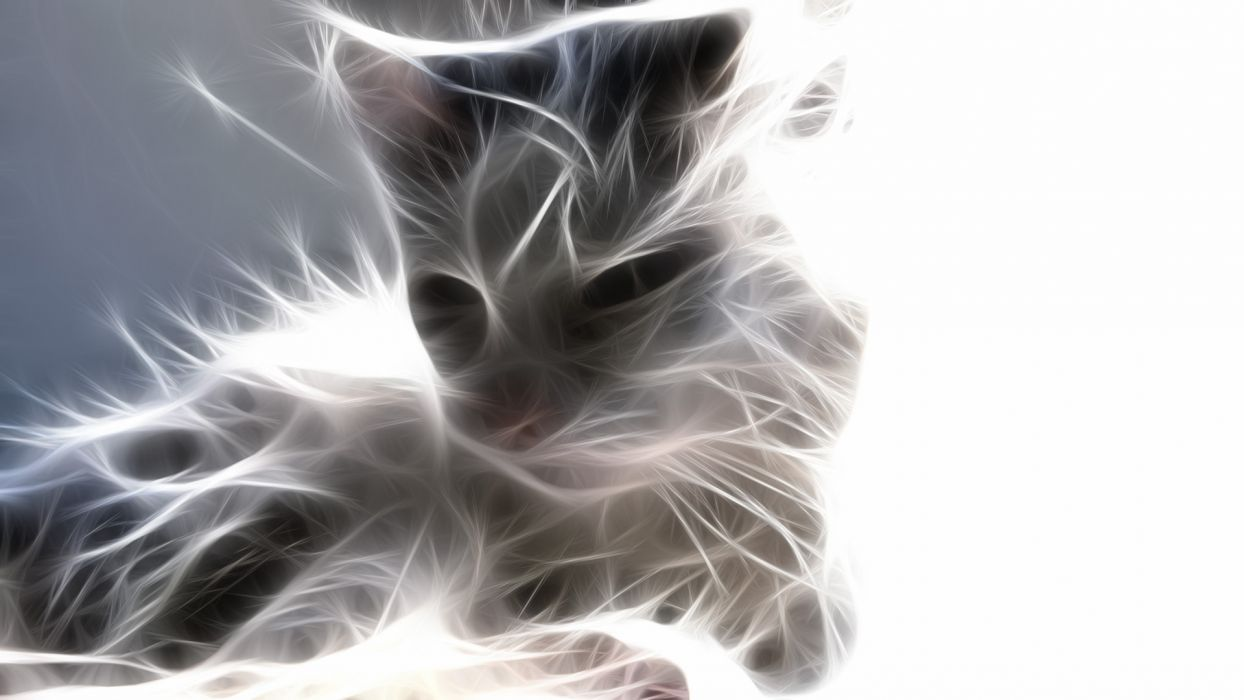 cats animals Fractalius wallpaper