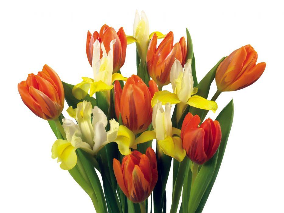 flowers tulips wallpaper