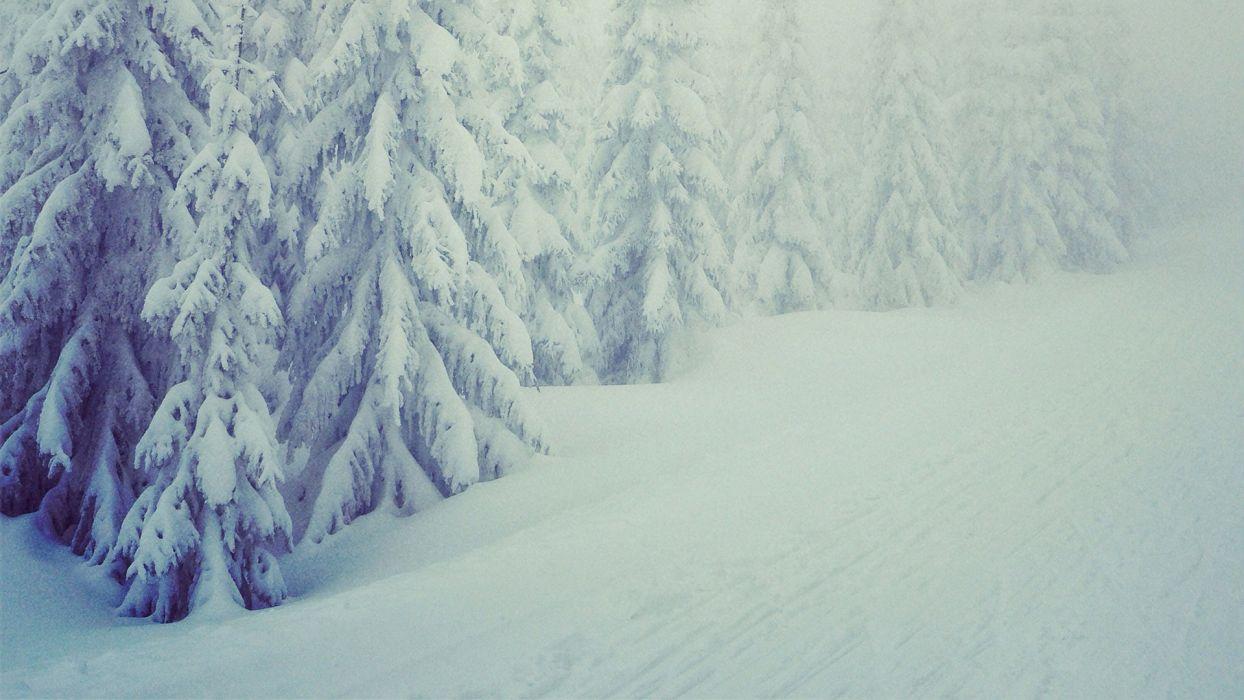 landscapes winter snow trees wallpaper