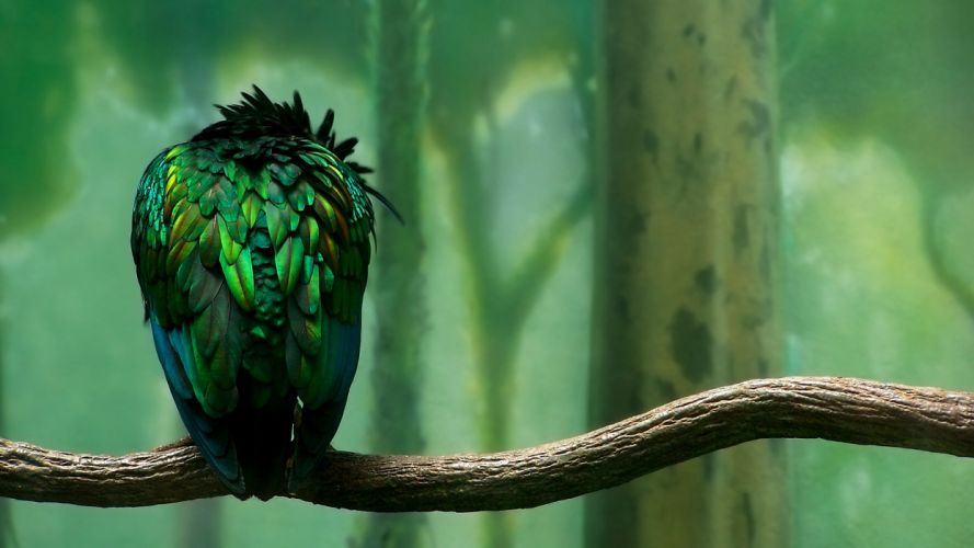 green nature trees birds duplicate branches wallpaper