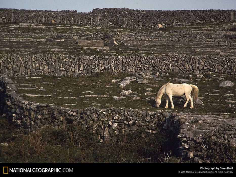 nature rocks National Geographic white horse wallpaper