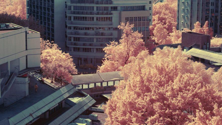 trees cities wallpaper