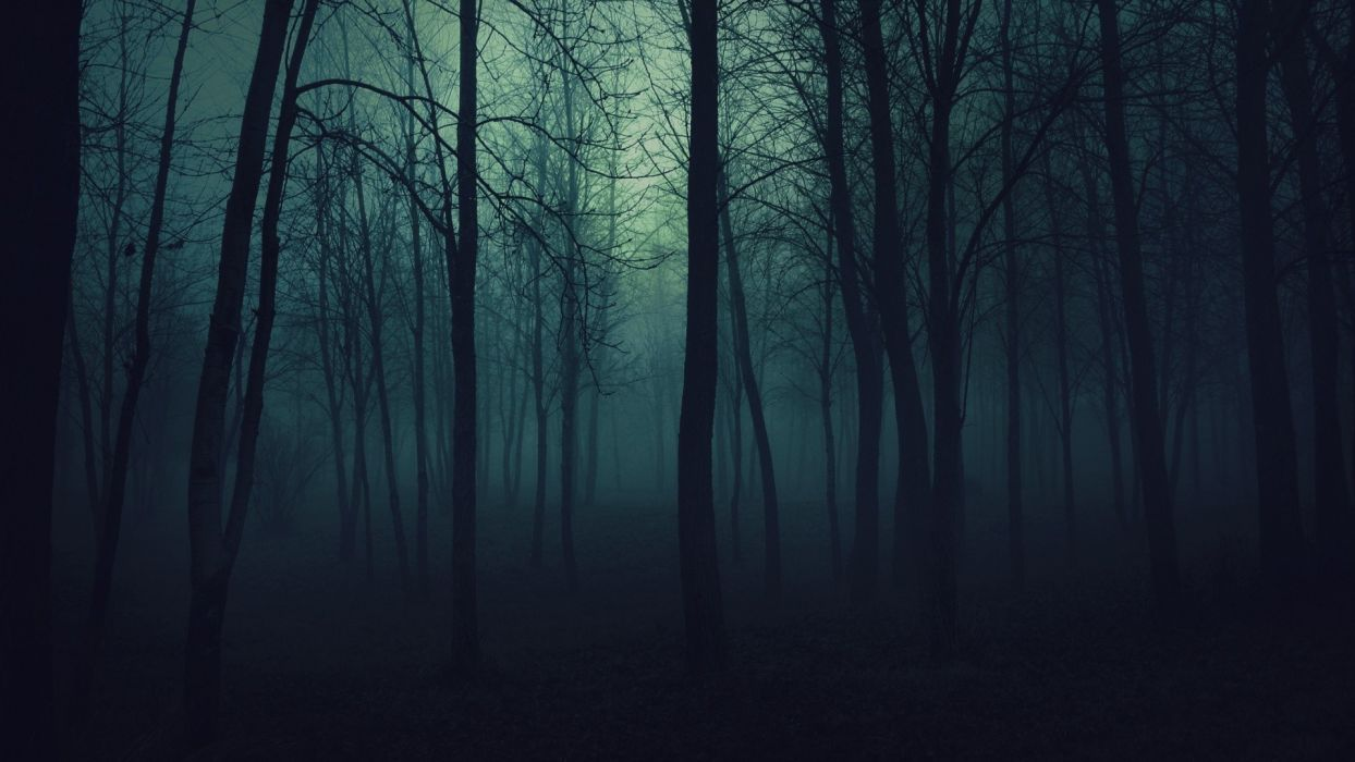 creepy trees dark forests mist wallpaper