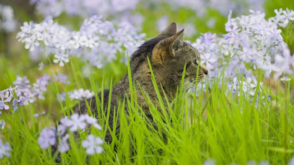 flowers cats wallpaper