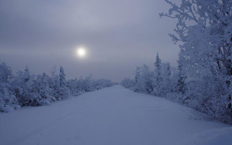 landscapes winter snow trees night roads wallpaper