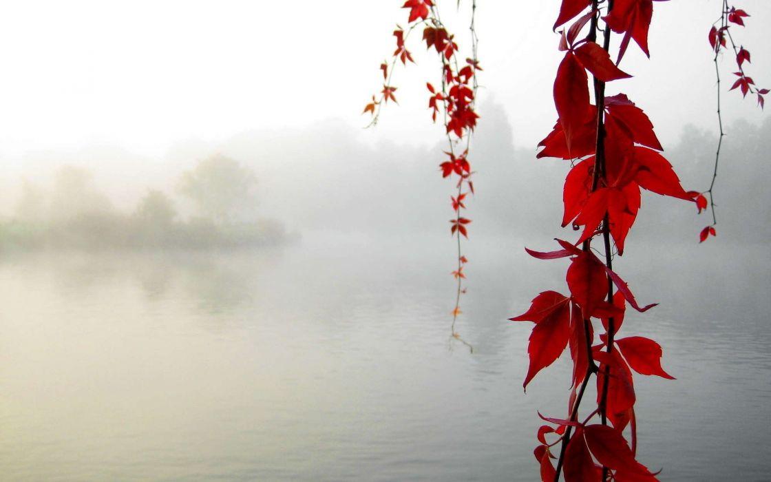 nature red leaves fog hanging vines wallpaper
