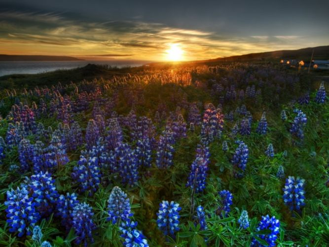 flowers skyscapes Bluebells wallpaper