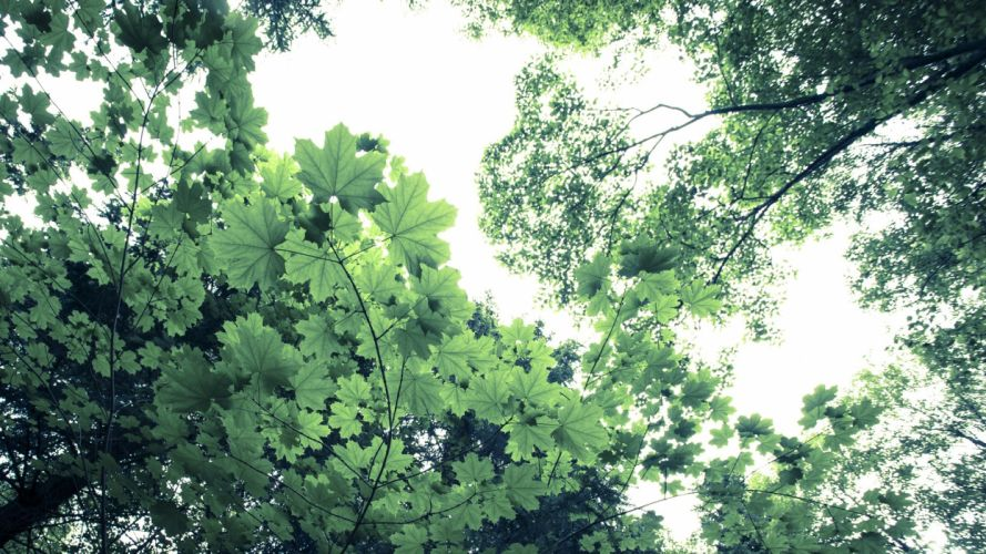 nature trees forests leaves wallpaper