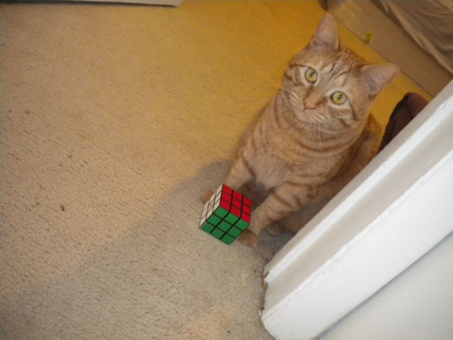 cats Rubiks Cube wallpaper