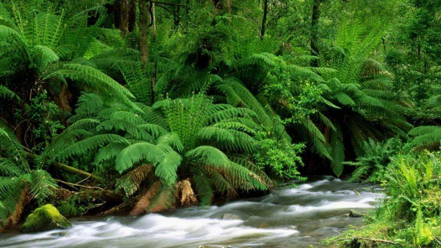 nature streams Australia ferns National Park wallpaper