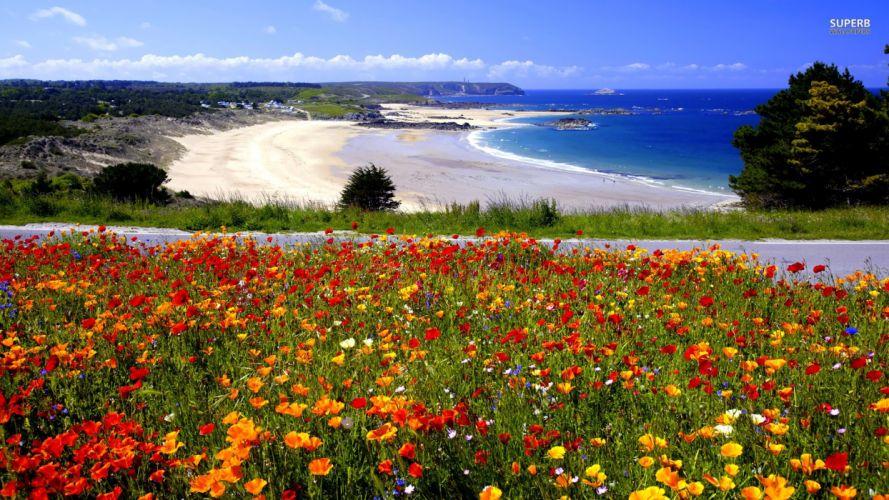 flowers beaches wallpaper