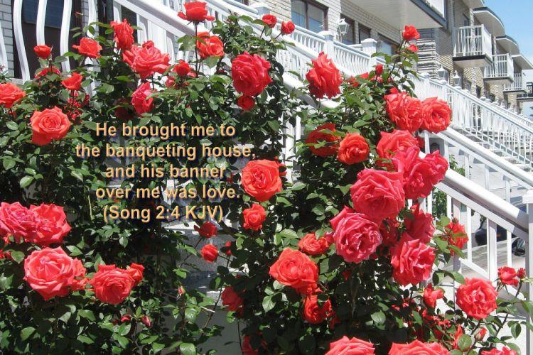 BIBLE-VERSES religion quote text poster bible verses e wallpaper