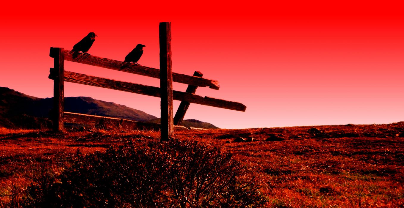 crow raven red psychedelic fence bird     f wallpaper