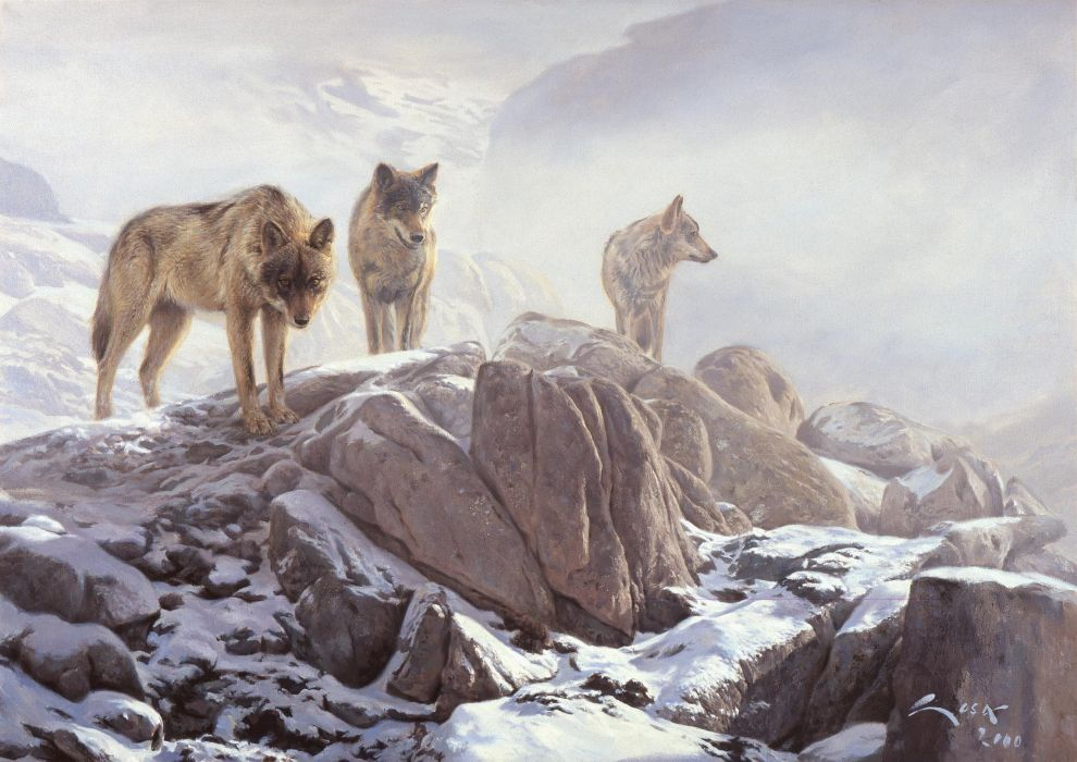 WOLF wolves predator art         rw wallpaper