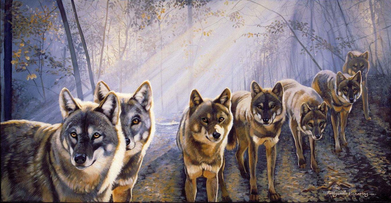 WOLF wolves predator art     f wallpaper