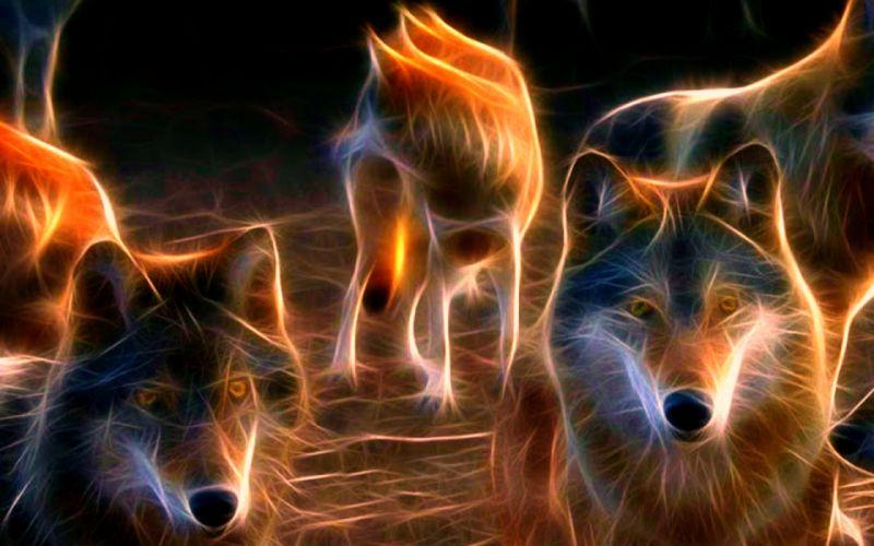 WOLF wolves predator fractal g wallpaper