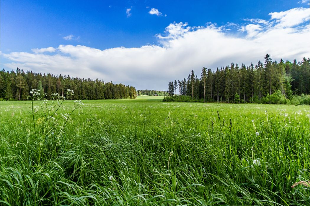 field grass forest trees sky landscape     r wallpaper