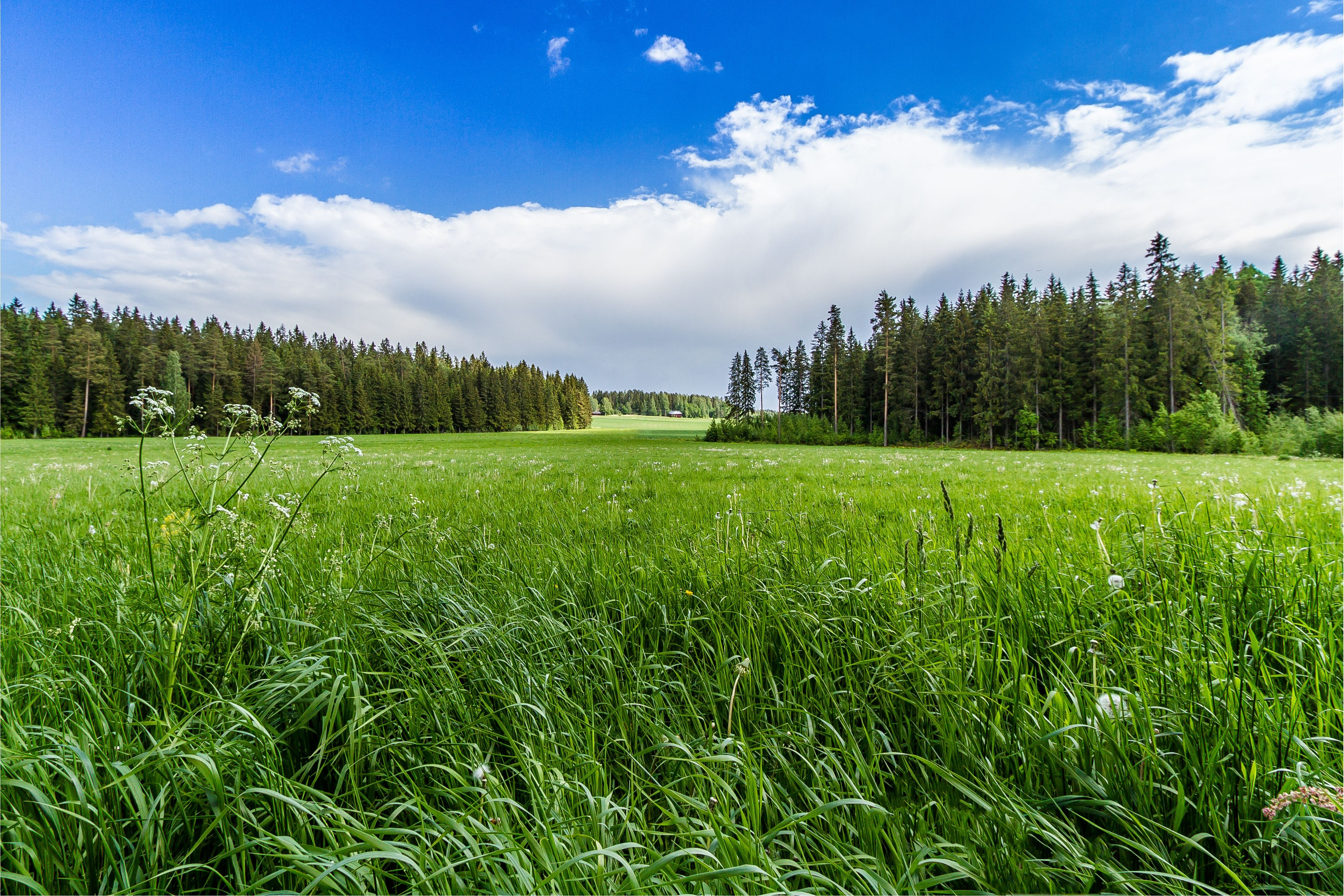 Field And Sky Background Field Grass Forest Trees Sky