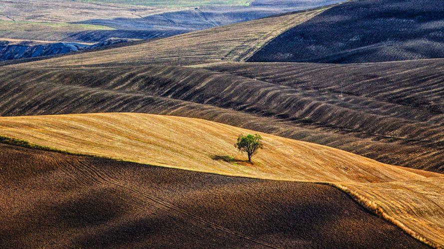 hills Italy Tuscany tree field g wallpaper