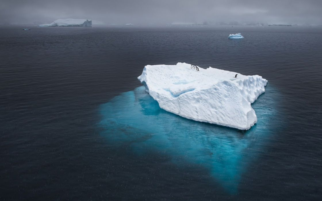iceberg ocean penguins Antarctica    d wallpaper