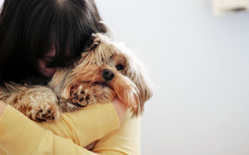mood girl brunette dog love f wallpaper