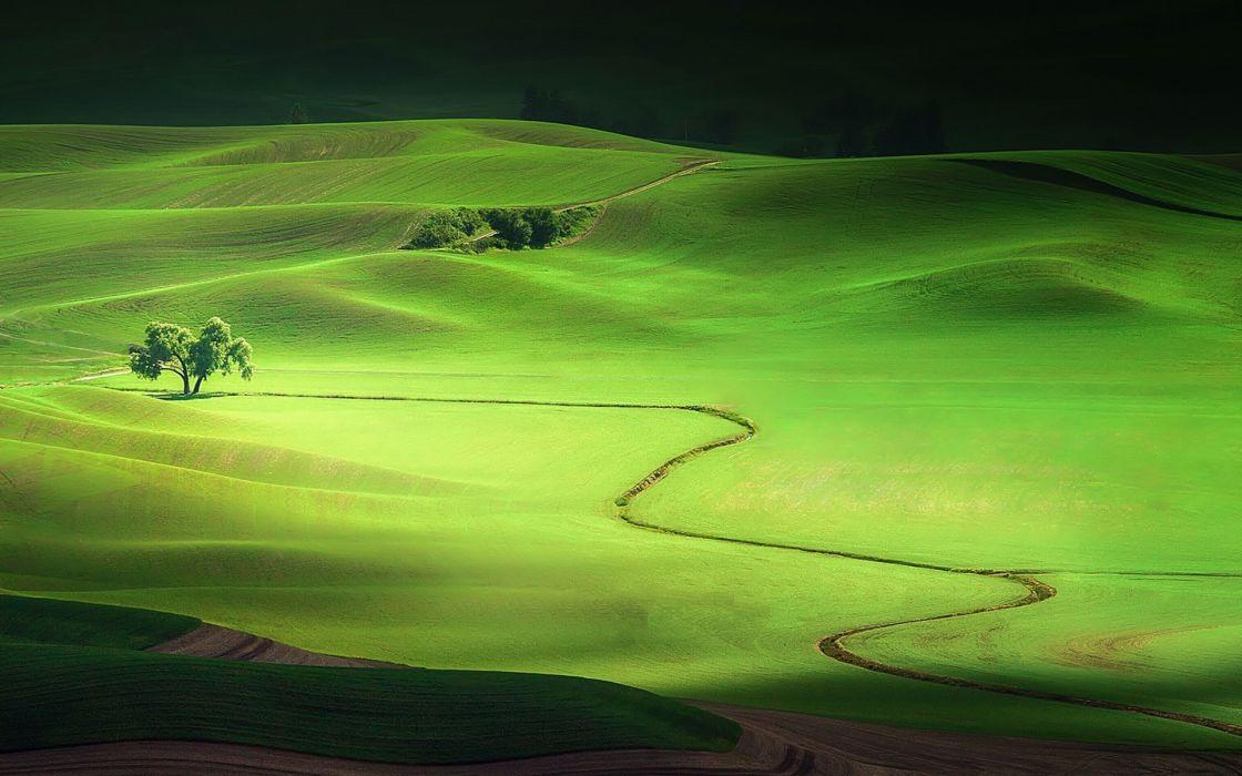 nature landscape summer relief tree     g wallpaper