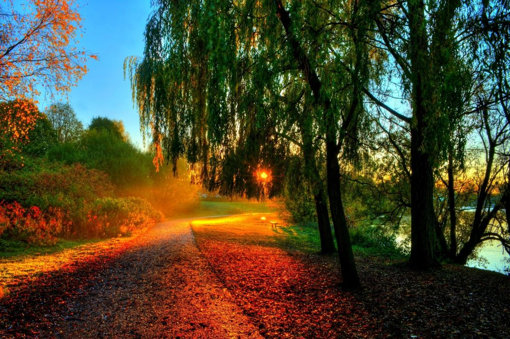 rays bench forest trees autumn leaves hdr walk sun sunset hdr      g wallpaper