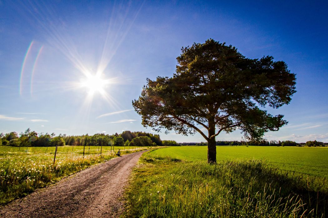 road field tree landscape    f wallpaper