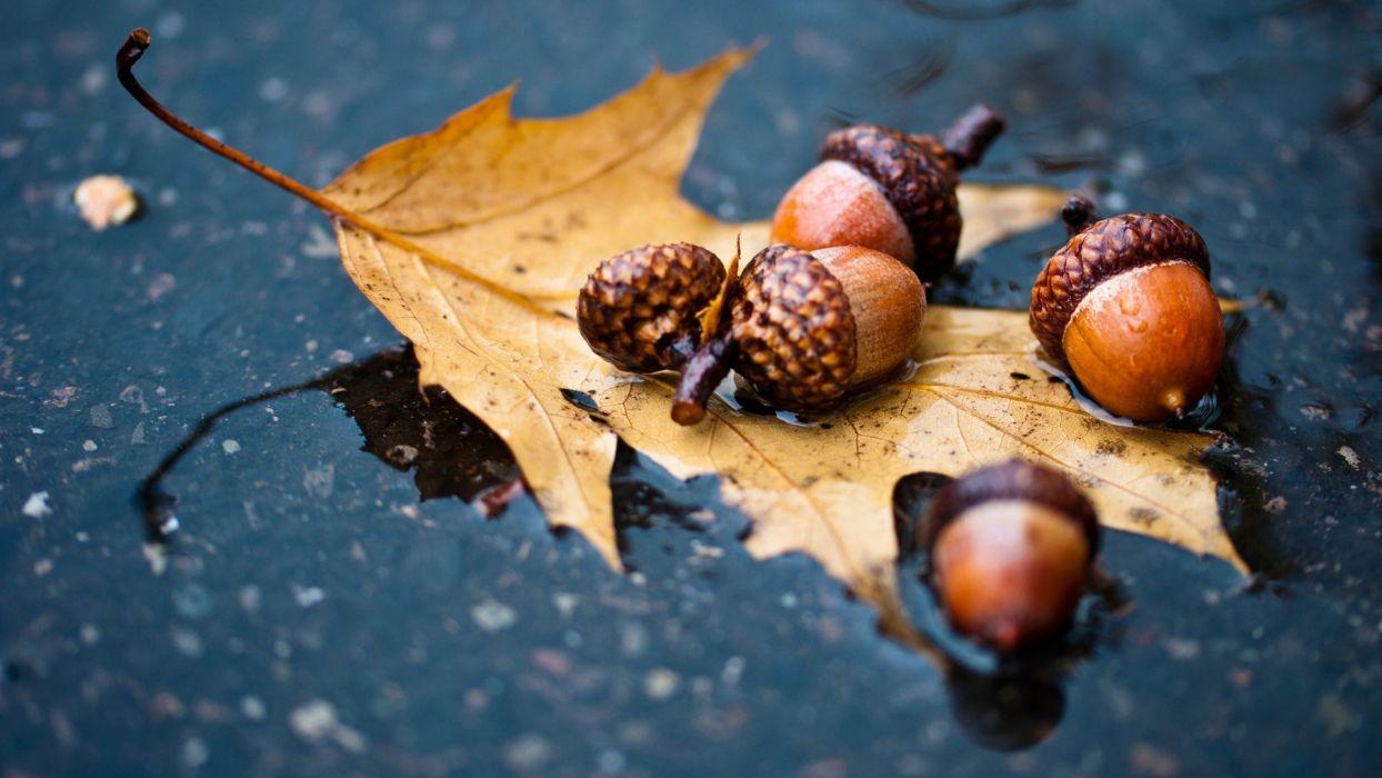 autumn oak wallpaper