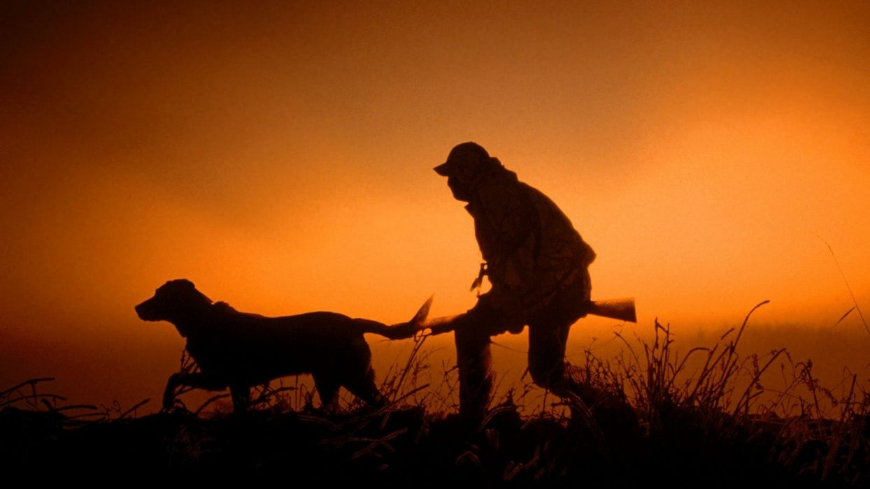 sunset guns dawn hunter silhouettes dogs dusk hunting wallpaper