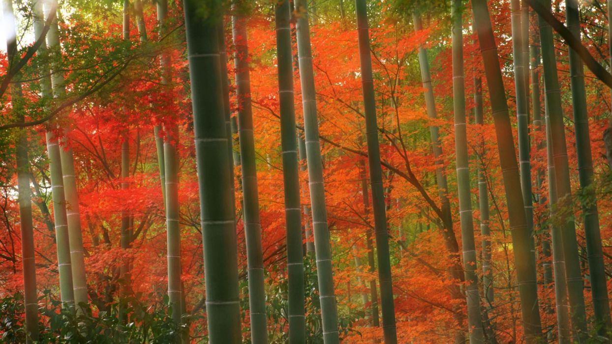 Japan forests bamboo Kyoto parks wallpaper
